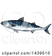 Clipart Of A Sketched And Colored Mackerel Fish Royalty Free Vector Illustration