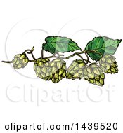Clipart Of Sketched Beer Hops Royalty Free Vector Illustration by Vector Tradition SM