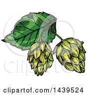 Clipart Of Sketched Beer Hops Royalty Free Vector Illustration