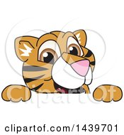 Clipart Of A Tiger Cub School Mascot Character Looking Over A Sign Royalty Free Vector Illustration