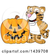 Clipart Of A Tiger Cub School Mascot Character With A Halloween Pumpkin Royalty Free Vector Illustration