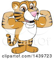 Clipart Of A Tiger Cub School Mascot Character Flexing Royalty Free Vector Illustration