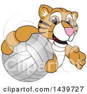 Clipart Of A Tiger Cub School Mascot Character Grabbing A Volleyball Royalty Free Vector Illustration by Toons4Biz