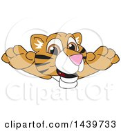 Clipart Of A Tiger Cub School Mascot Character Leaping Royalty Free Vector Illustration