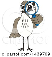 Clipart Of A Sandpiper Bird School Mascot Character Looking Through A Magnifying Glass Royalty Free Vector Illustration by Toons4Biz