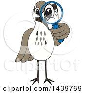 Sandpiper Bird School Mascot Character Looking Through A Magnifying Glass