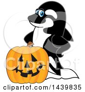 Clipart Of A Killer Whale Orca School Mascot Character With A Halloween Pumpkin Royalty Free Vector Illustration