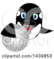 Killer Whale Orca School Mascot Character Grabbing A Volleyball