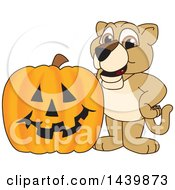 Clipart Of A Lion Cub School Mascot Character With A Halloween Pumpkin Royalty Free Vector Illustration