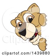 Lion Cub School Mascot Character Looking Around A Sign