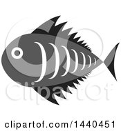 Clipart Of A Gray White And Black Marine Fish Royalty Free Vector Illustration