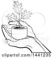 Black And White Hand Holding A Seedling Maple Plant