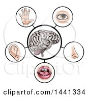Brain With The Five Senses Around It