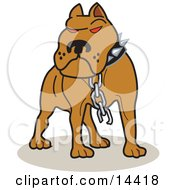 Tough Brown American Pitbull Terrier Dog With Red Eyes Wearing A Spiked Collar And A Broken Chain