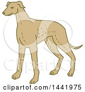 Clipart Of A Mono Line Styled Standing Greyhound Dog Royalty Free Vector Illustration by patrimonio