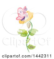 Clipart Of A Cocoon Larvae Caterpillars And Butterfly On A Flower The Life Cycle Of A Butterfly Royalty Free Vector Illustration