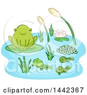 Life Cycle Of A Frog With Eggs Tadpoles And An Adult