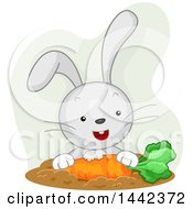 Clipart Of A Happy Rabbit Eating A Carrot Royalty Free Vector Illustration