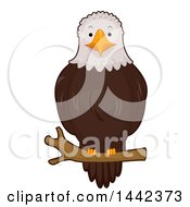 Clipart Of A Bald Eagle Perched On A Branch Royalty Free Vector Illustration by BNP Design Studio