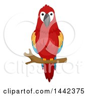 Clipart Of A Scarlet Macaw On A Branch Royalty Free Vector Illustration