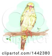 Clipart Of A Budgerigar Budgie Parakeet Bird On A Branch Royalty Free Vector Illustration by BNP Design Studio
