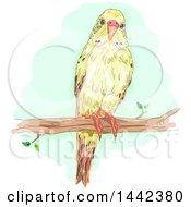 Budgerigar Budgie Parakeet Bird On A Branch