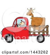 Cartoon White Man Driving A Red Pickup Truck And Hauling A Cow