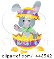 Gray Easter Bunny Rabbit In A Cracked Decorated Egg Shell