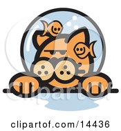 Grumpy Ginger Cat With Fish Making Fun Of Him In A Fishbowl Stuck On His Head Clipart Illustration