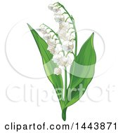 Clipart Of A Lily Of The Valley Convallaria Plant Royalty Free Vector Illustration