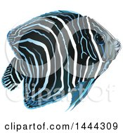 Clipart Of A Pomacanthus Semicirculatus Angelfish Royalty Free Vector Illustration