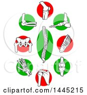 Clipart Of Human Bones And Joints Over Red And Green Circles Royalty Free Vector Illustration by Vector Tradition SM