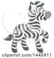 Adorable Baby Zebra Walking