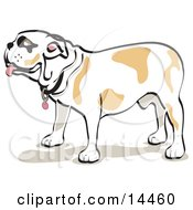 Bulldog Standing In Profile Clipart Illustration