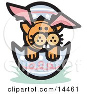 Orange Cat Wearing Bunny Ears And Buck Teeth And Sitting In An Easter Egg Clipart Illustration