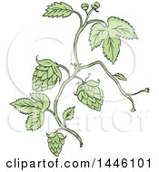 Clipart Of A Sketched Styled Hop Plant Royalty Free Vector Illustration by patrimonio