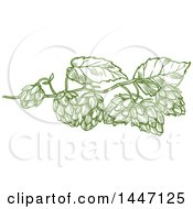 Clipart Of Sketched Leaves And Hops Royalty Free Vector Illustration by Vector Tradition SM