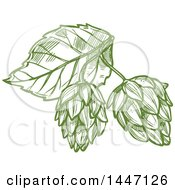 Clipart Of A Sketched Leaf And Hops Royalty Free Vector Illustration by Vector Tradition SM