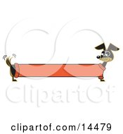 Poster, Art Print Of Long Stretched Dachshund Dog In An Orange Sweater Appearing To Be A Banner