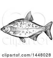 Black And White Sketched Bream Fish