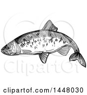 Black And White Sketched Herring Fish
