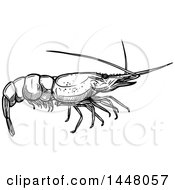 Black And White Sketched Shrimp