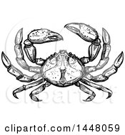 Black And White Sketched Crab