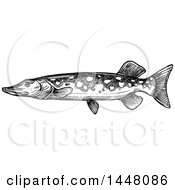 Black And White Sketched Pike Fish