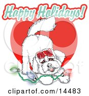 Playful Bichon Frise Dog With Christmas Lights