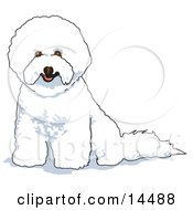 White Bichon Frise Dog Clipart Illustration by Andy Nortnik