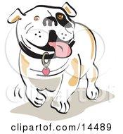 Poster, Art Print Of Happy Bulldog Walking And Hanging His Tongue Out