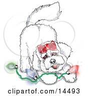 Bichon Frise Dog Playing With Colorful Christmas Lights Clipart Illustration