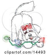 Bichon Frise Dog Playing With Colorful Christmas Lights