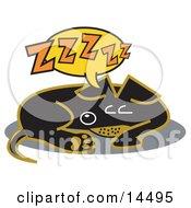 Exhausted Teckel Dog Sleeping
